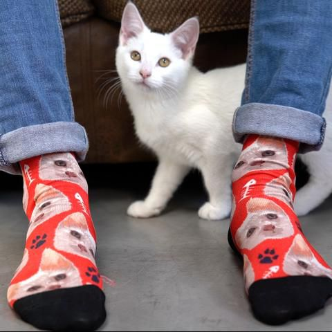 Cat walking by socks with its picture printed on them by lovimals.