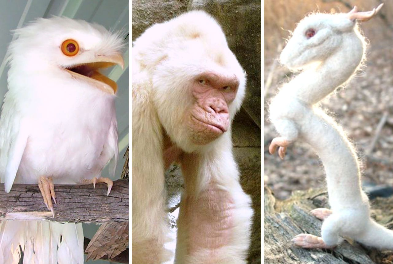 32 Astonishingly Beautiful Albino Animals