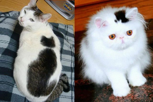 cat fur patterns