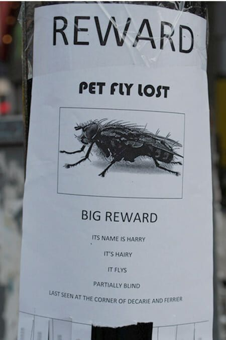 funny missing posters