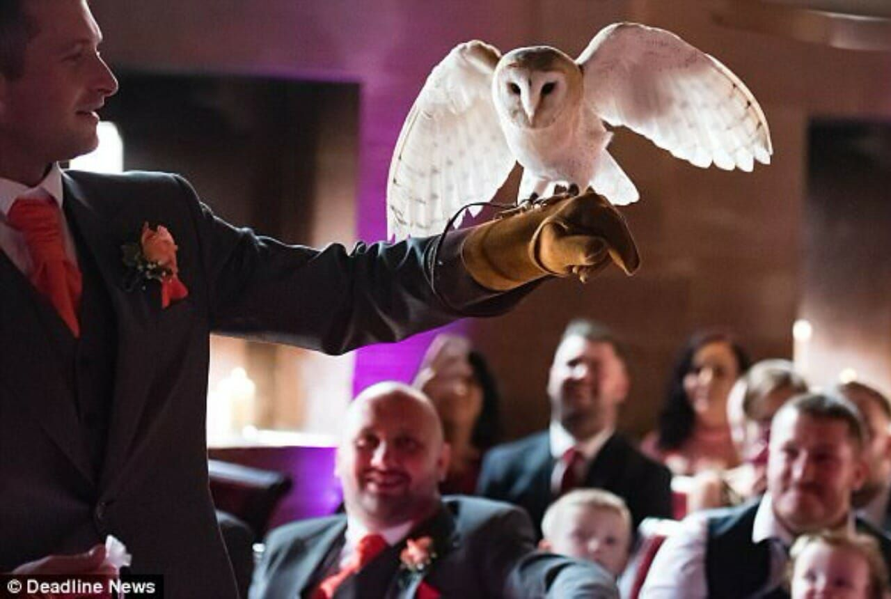 British couple uses an owl as a ring-bearer