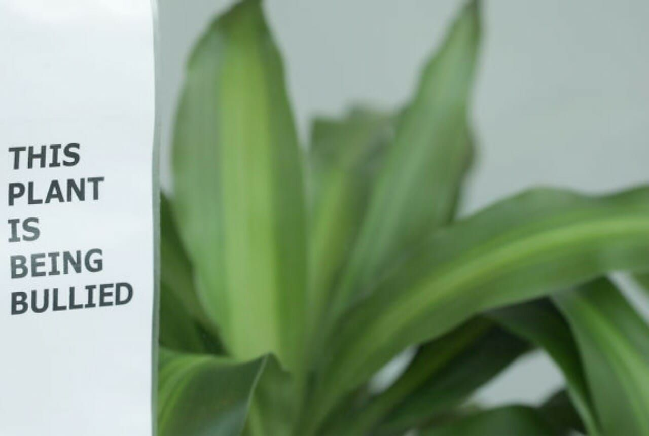 IKEA asked children to bully a plant for 30 days