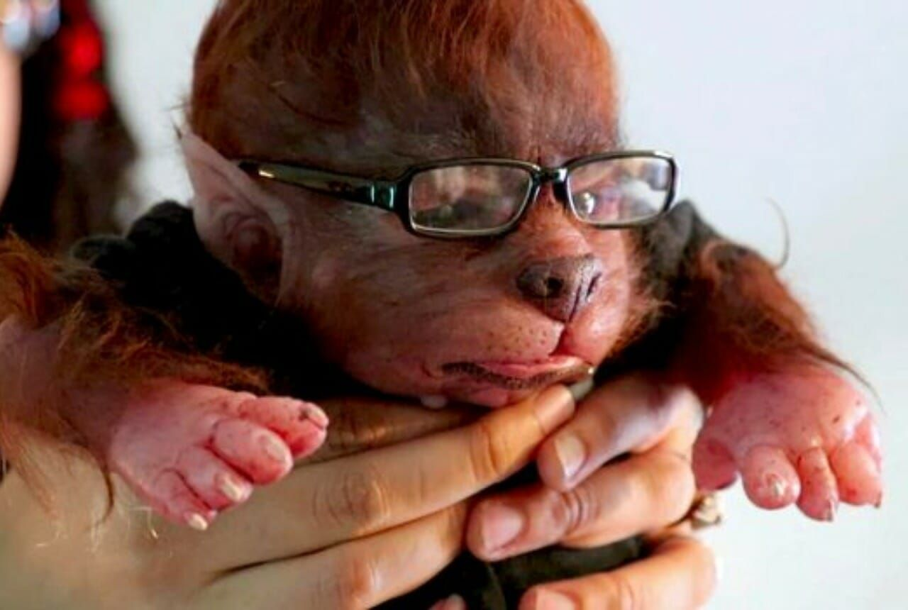 lifelike baby werewolves