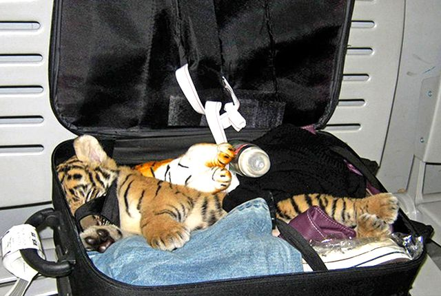 craziest animal finds at airport security