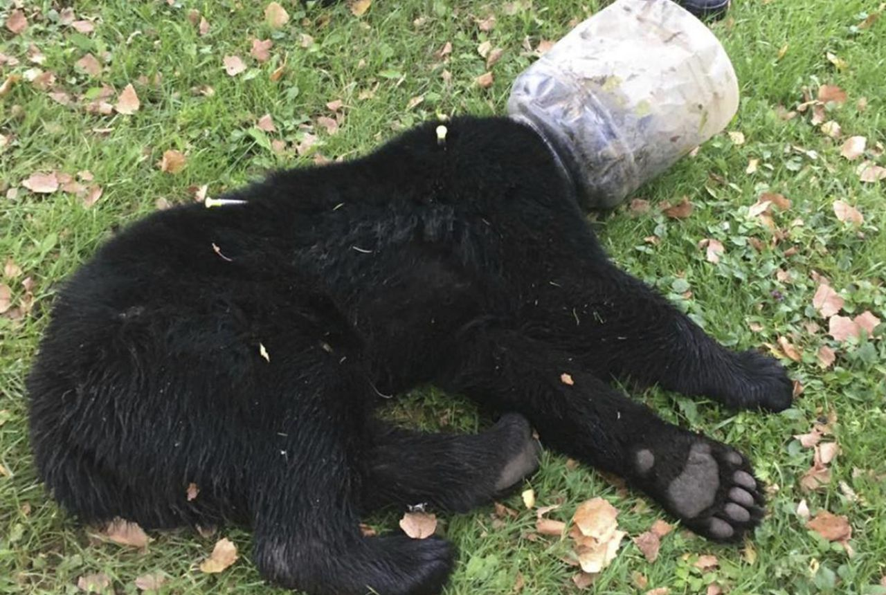 animal rescuers save a bear cub