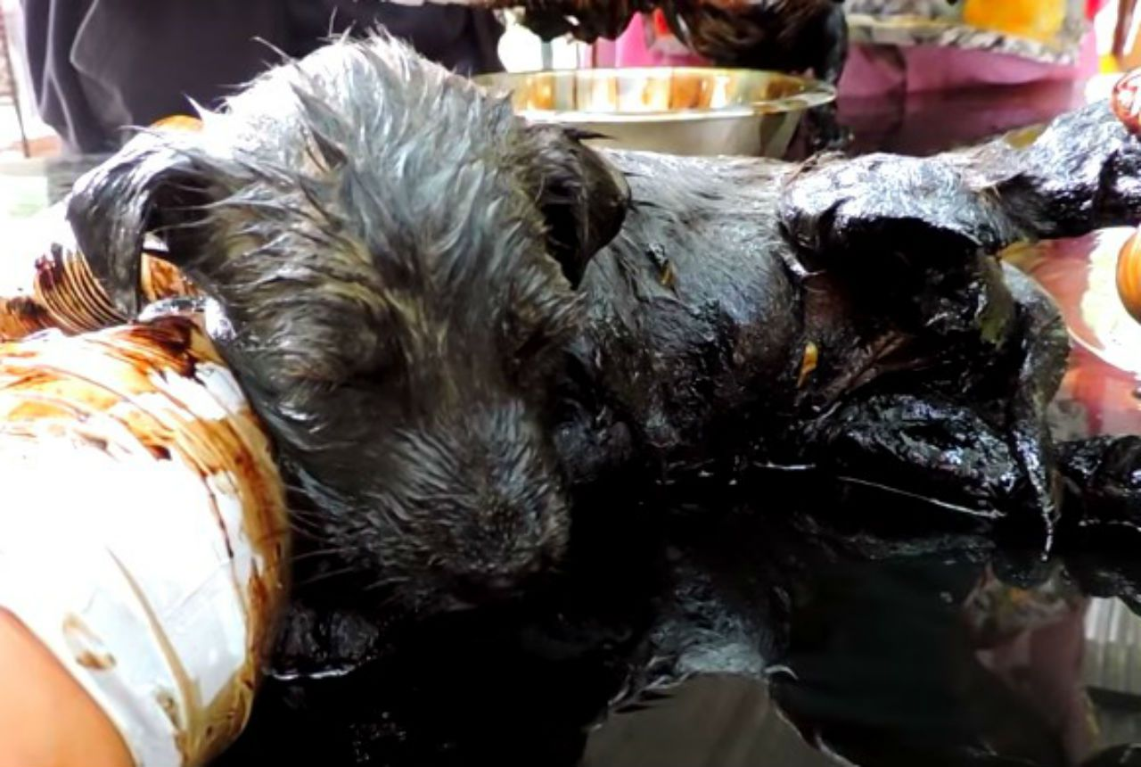 puppies rescued from tar pit