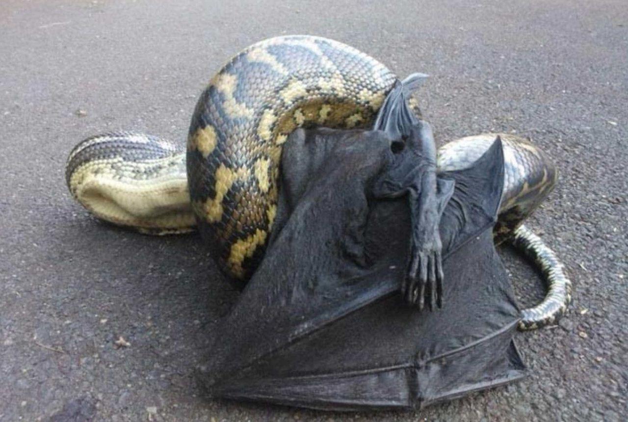 terrifying australian animals