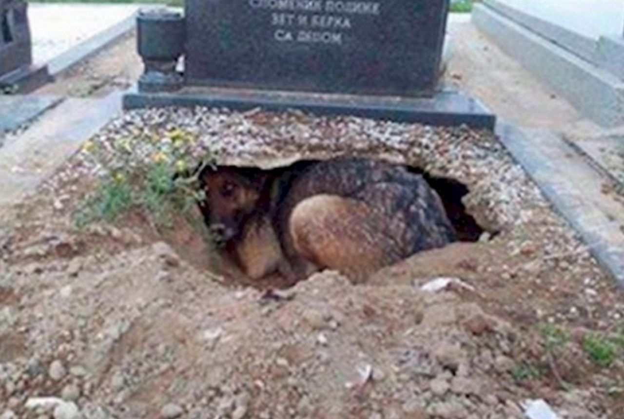 dog living in a grave
