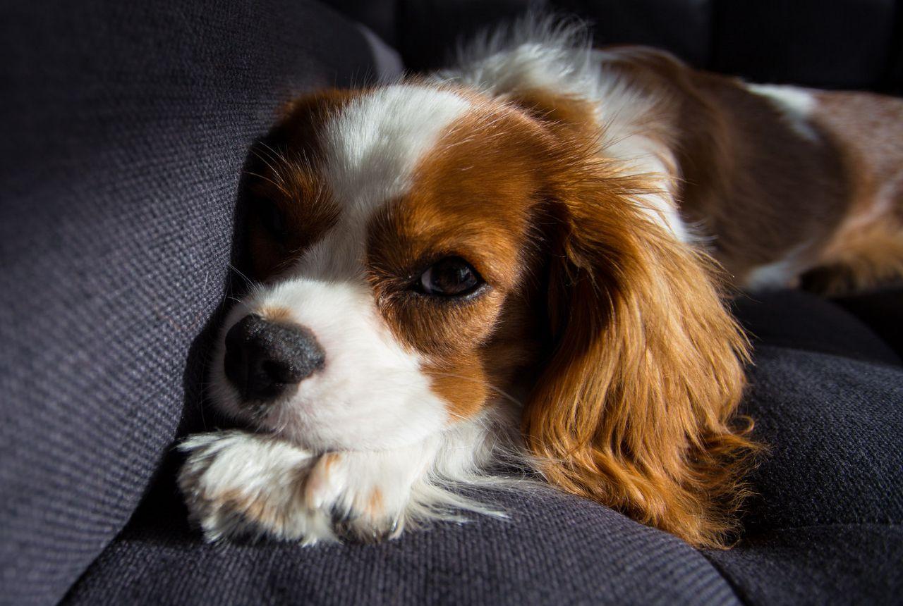 dog behavior explained